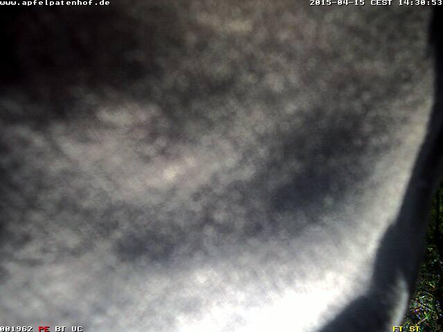 Webcam , Hinterdeich -  Apfelpatenhof